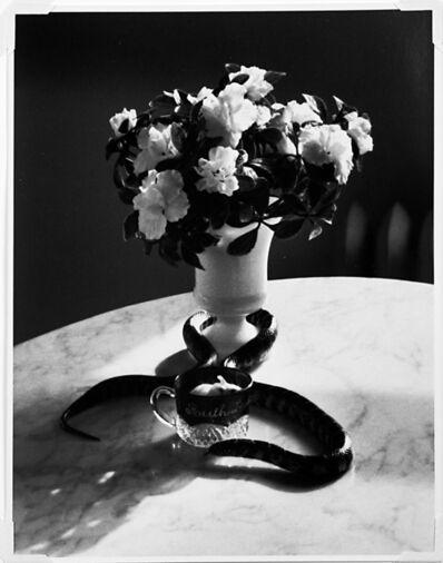 André Kertész, 'Still Life Portfolio 1926-1978', 1981