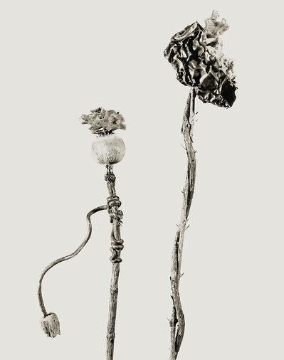 Joan Fontcuberta, 'Herbarium', 1985