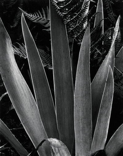 Paul Strand, 'Iris', 1928