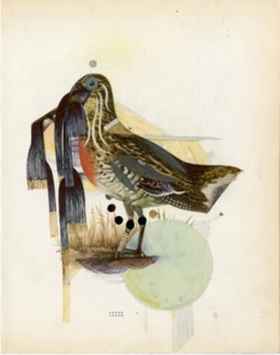 Monica Canilao, 'The Common Snipe', 2014