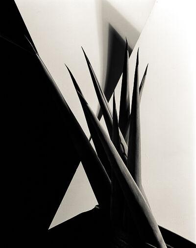 Imogen Cunningham, 'Agave, Design 1, 1920s', 1987