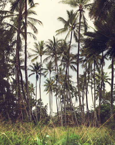 LM Chabot, 'Hawaii 37', 2015