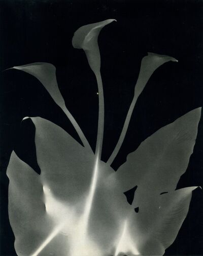 Jeanne Mandelo, 'Sans titre', ca. 1950