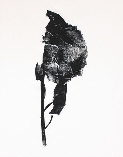 T.R. Ericsson, 'The First Rose', 2016