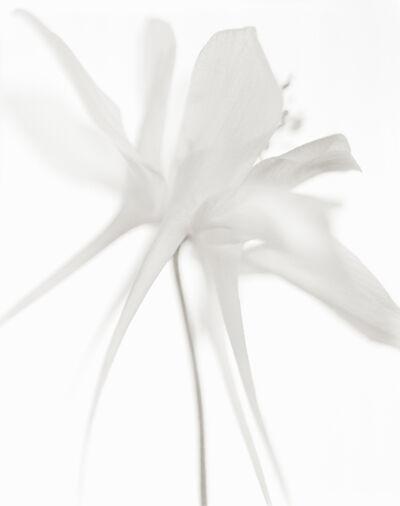 Yumiko Izu, 'Secret Garden Blanc 95', 2009
