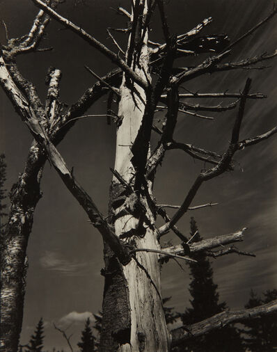 Paul Strand, 'Dead Tree, Vermont', 1945