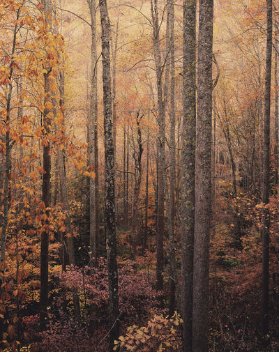 Christopher Burkett, 'Glowing Appalachian Forest, Virginia', 2016