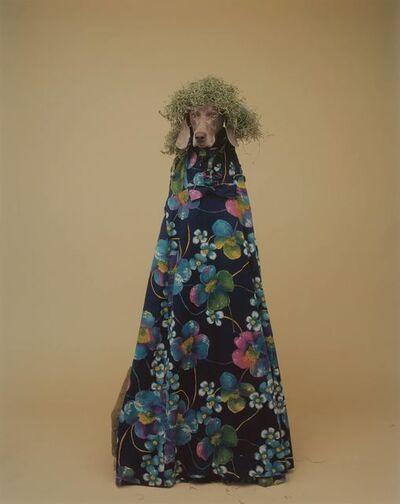William Wegman, 'Green Hair'