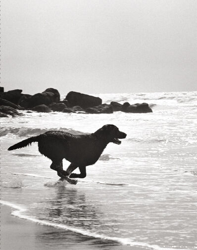 Michael Dweck, 'Beach Dog', 2011