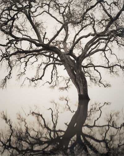 Roman Loranc, 'Floating Oak', 2005