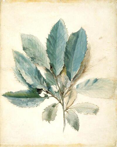 John Ruskin, 'Chestnut Leaves', about 1870