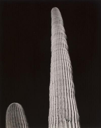 Frederick Sommer, 'Untitled (Saguaro, Black Sky)', ca. 1940