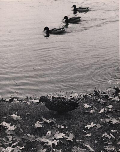 André Kertész, 'Three ducks', 1949