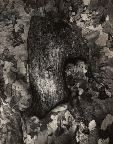 Wynn Bullock, 'Sycamore Tree Scar', 1971