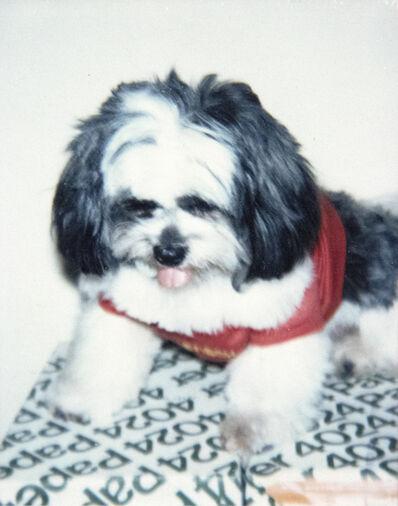 Andy Warhol, 'Dog', ca. 1985