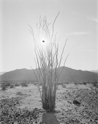 CJ Heyliger, 'Black Sun and Ocotillo', 2017