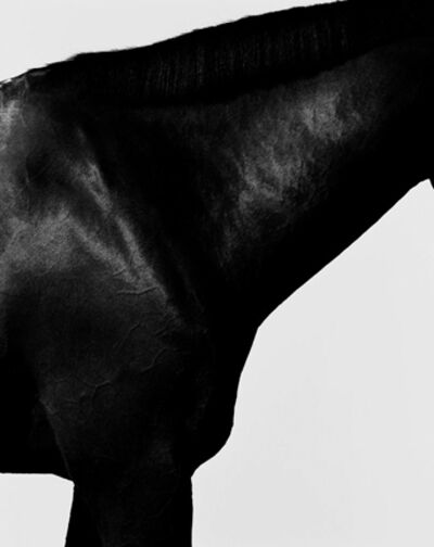 Steven Klein, 'Horse Neck I', 1995