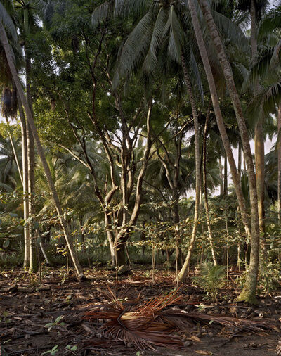 Andrew Moore, 'Playa Duaba'