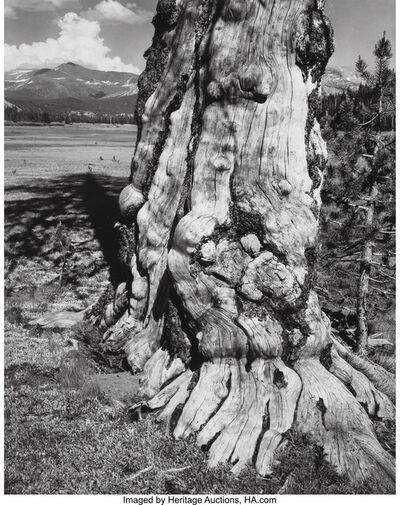 Ansel Adams, 'Tuolumne Meadows, Yosemite National Park', 1963