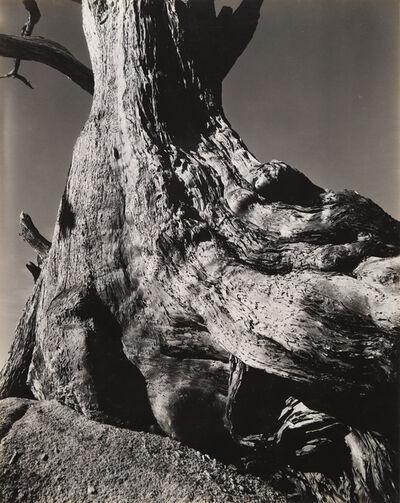 Edward Weston, 'Monterey Cypress, Pebble Beach, 1932', 1932