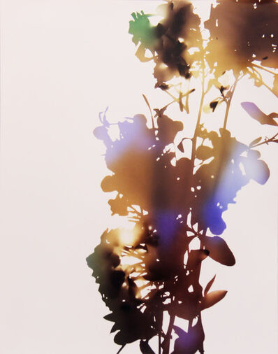 James Welling, '001, A (from 'Flowers')', 2006