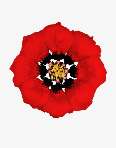 Howard Schatz, 'Fashion Flowers:  Poppy', 2006
