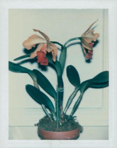 Andy Warhol, 'Flowers', 1982