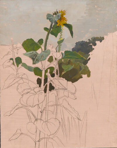 Charles Mahoney, 'Study of a sunflower', ca. 1950