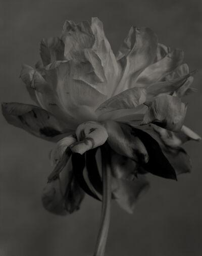 Yumiko Izu, 'Secret Garden Noir 8', 2004