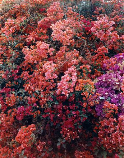 Thomas Struth, 'Paradise 26, Palpa, Peru  2003', 2003