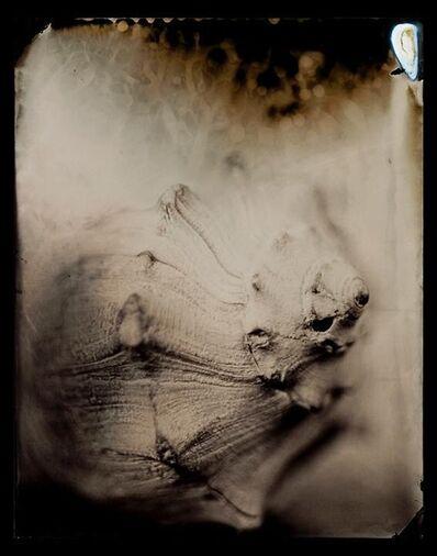 Lara Porzak, 'Shell', 2015