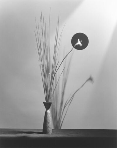 Robert Mapplethorpe, 'Flower', 1983