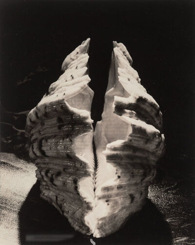 Ruth Bernhard, 'Bear Claw Clam', 1943