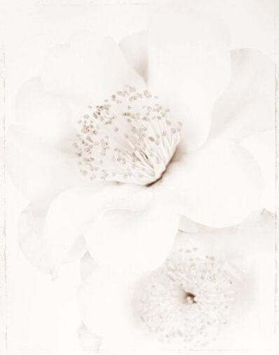 Ron van Dongen, 'Camellia j. 'Silver Waves' (WOW 077)', 2008