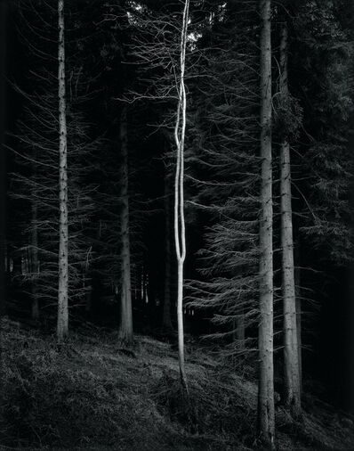 Paul Hart, 'Alien', 2007
