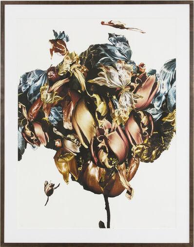 Renata Kudlacek, 'Metamorphosis Naturalis - Tulip III', 2018