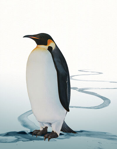 Ink Dwell (Jane Kim), 'Emperor Penguin', 2020