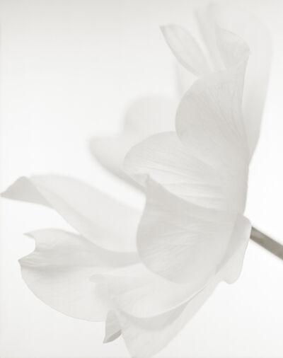 Yumiko Izu, 'Secret Garden Blanc 63', 2008