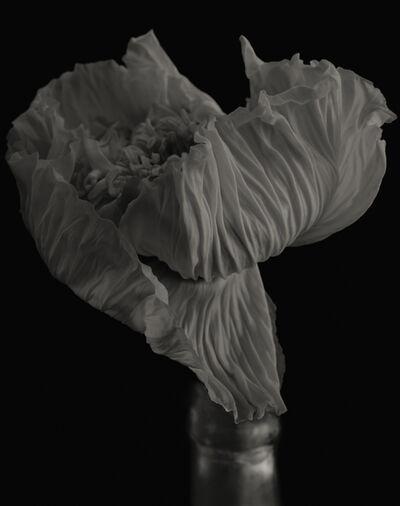 Yumiko Izu, 'Secret Garden Noir 21', 2004