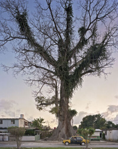 Andrew Moore, 'National Tree'