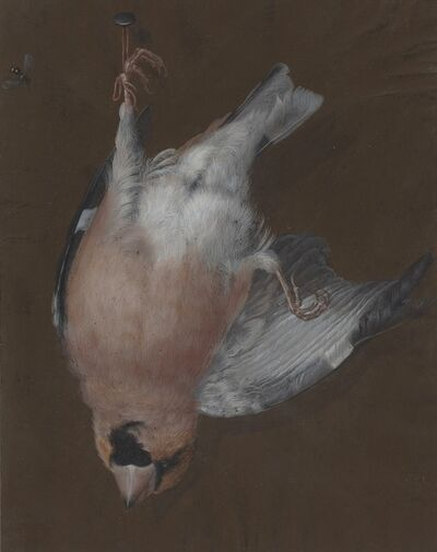 Barbara Dietzsch, 'A Rose-Breasted Finch Hanging from a Nail', ca. 1760