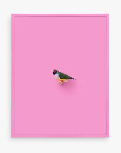 Daniel Handal, 'Lady Gouldian Finch (Veronese)', 2018