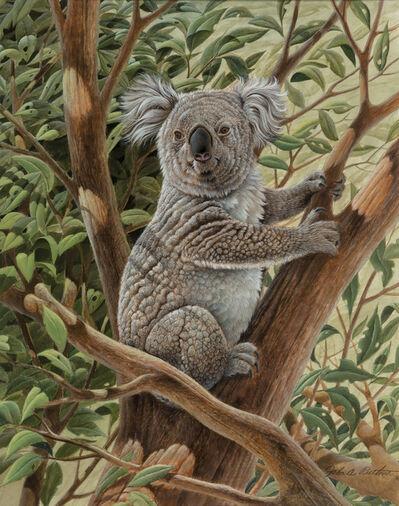 John Ruthven, 'Koala Bear Austrailia', ca. 1970