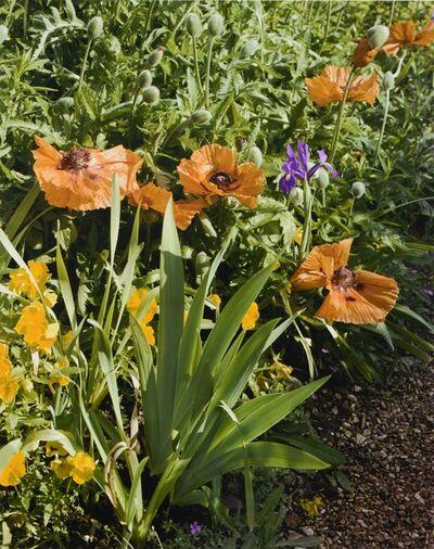 Stephen Shore, 'Poppy and yellow irises', 2002