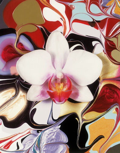 Christopher Beane, 'Hollywood Phalenopsis White with Fuschia Center', 2014
