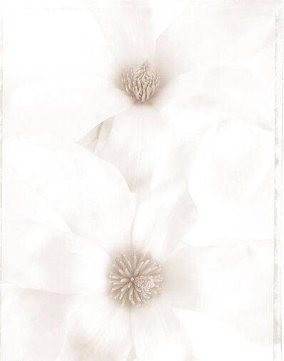 Ron van Dongen, 'Magnolia denudata (WOW 073)', 2008