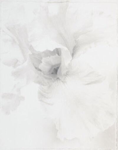 Ron van Dongen, 'Iris 'Pacific Grove' (WOW 014)', 1995