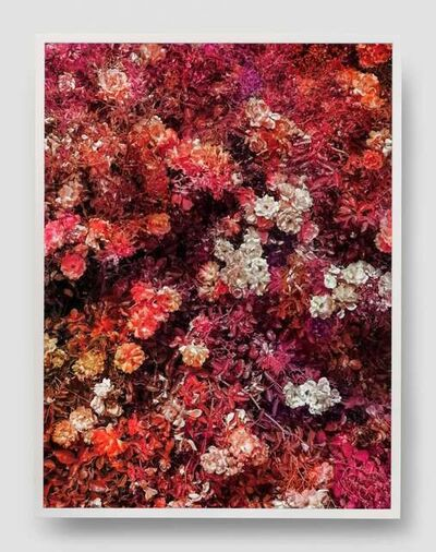 Trevor Paglen, 'Bloom (#733c3c)', 2020