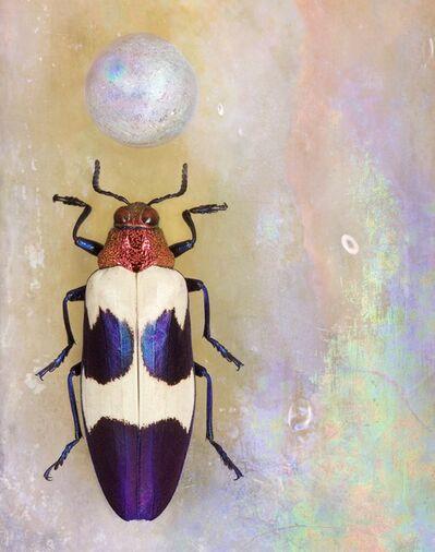 Jo Whaley, 'Chrysochroa bugueti rugicollio'