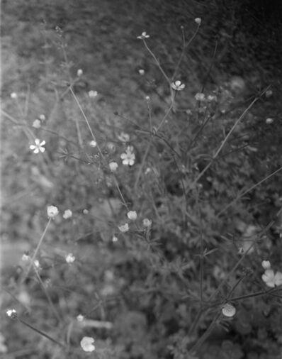 Iris Wu 吴靖昕, 'Untitled(flowers) ', 2020